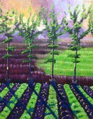 FARM VIEW HARYANA