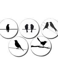 5-BLACK BIRDS